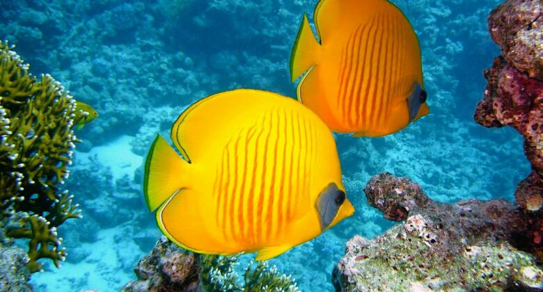 Aquaristik-Bücher Empfehlungen: