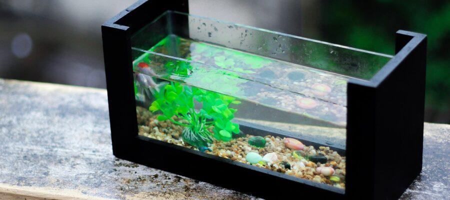 aquarium-becken online kaufen